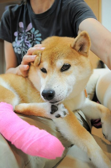 Meet The Real Dog Behind The Doge Meme With Images Real Dog