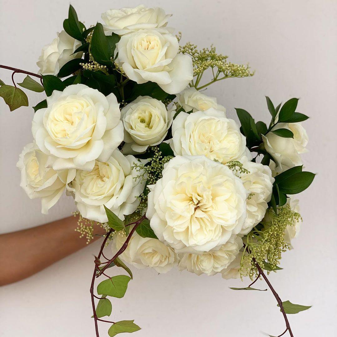 "Holly Chapple on Instagram ""ELLA 👏🏼👏🏼👏🏼 garden roses, the"