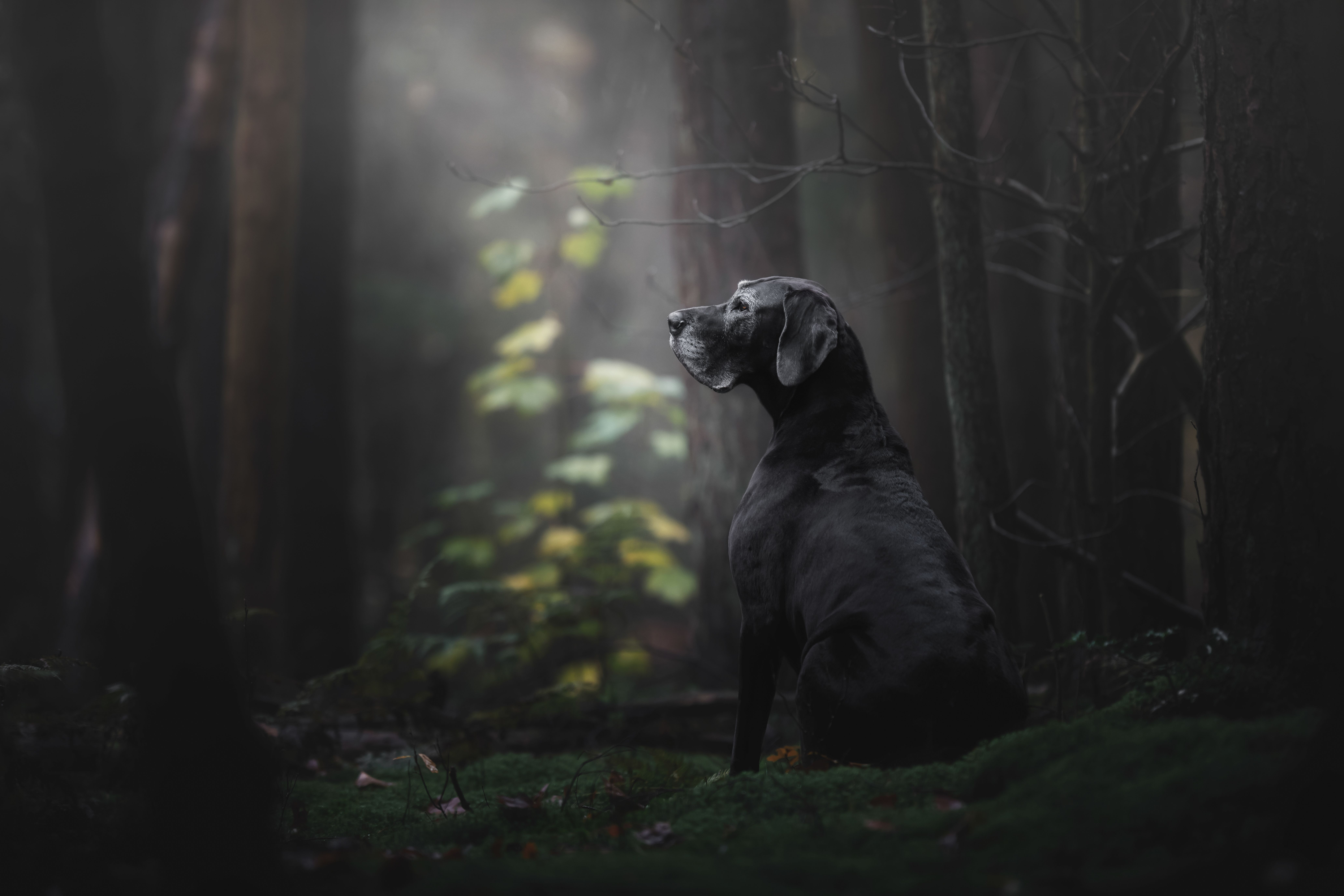 Winning Kennel Club Images Celebrate Dogs From All Walks Of Life