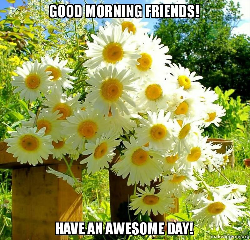Good Morning Memes Good Morning Friends Have An Awesome Day Make A Meme Fragrant Flowers Trees To Plant Beautiful Flowers