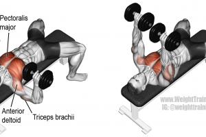 Dumbbell Bench Press Exercise Fitness Egzersizleri Ust Beden Egzersizleri Vucut Gelistirme