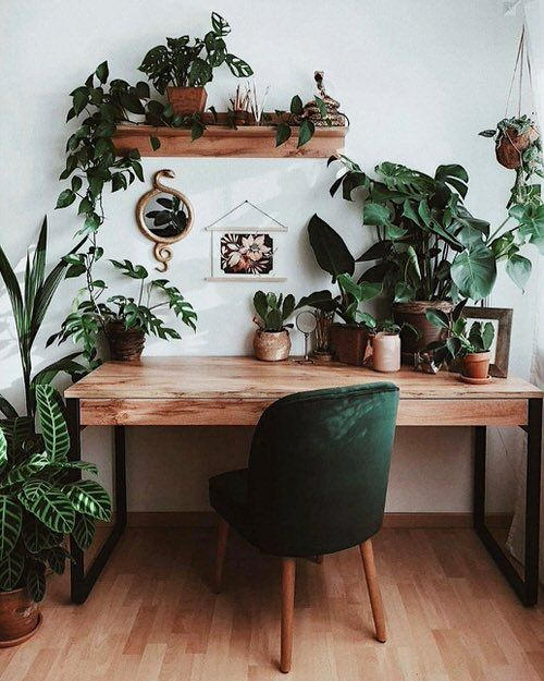 20 Office Plant Decor Ideas For Green Working Environment!