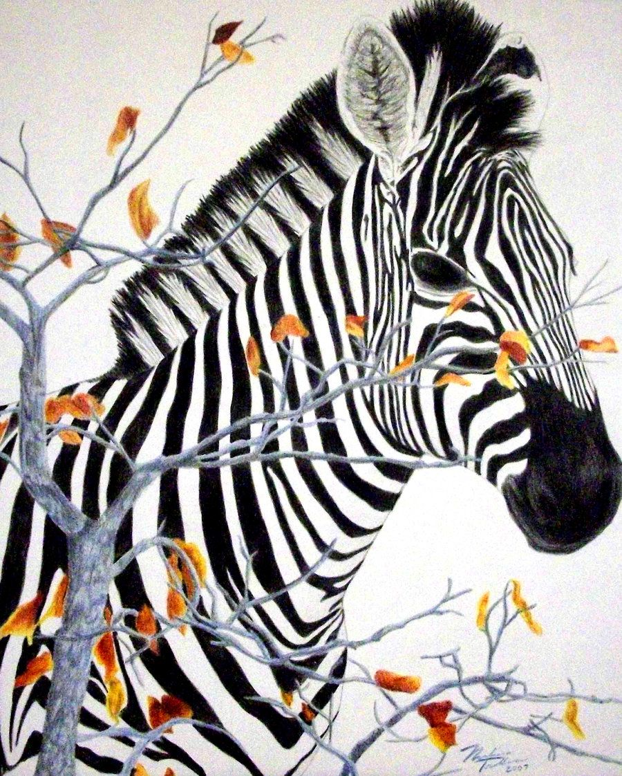 Color pencil drawings colored pencils drawings zebra colored pencil by noknack jpg giraffe colors