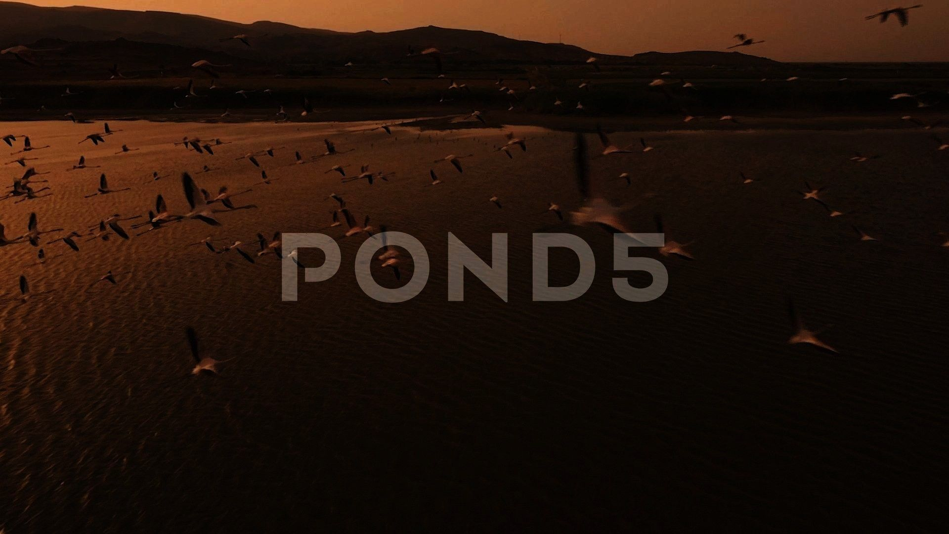 Drone Fly Through Stock Footage DroneSwarmFootageFlamingoFlamingo Swarm  Drone Fly Through Stock Footage DroneSwarmFootageFlamingo Graphic Design  Graphic Design Ideas  A...