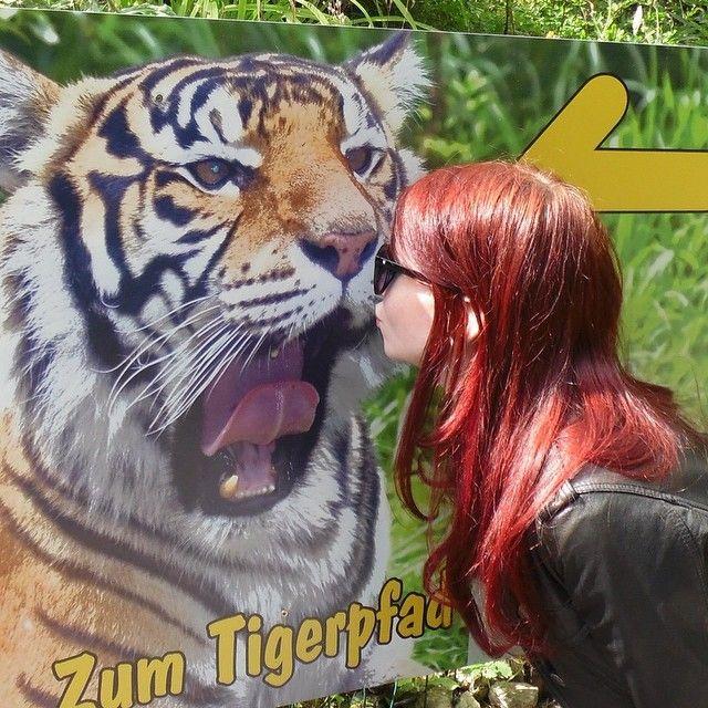 neulich im Tierpark  #zoo #tierpark #tiger