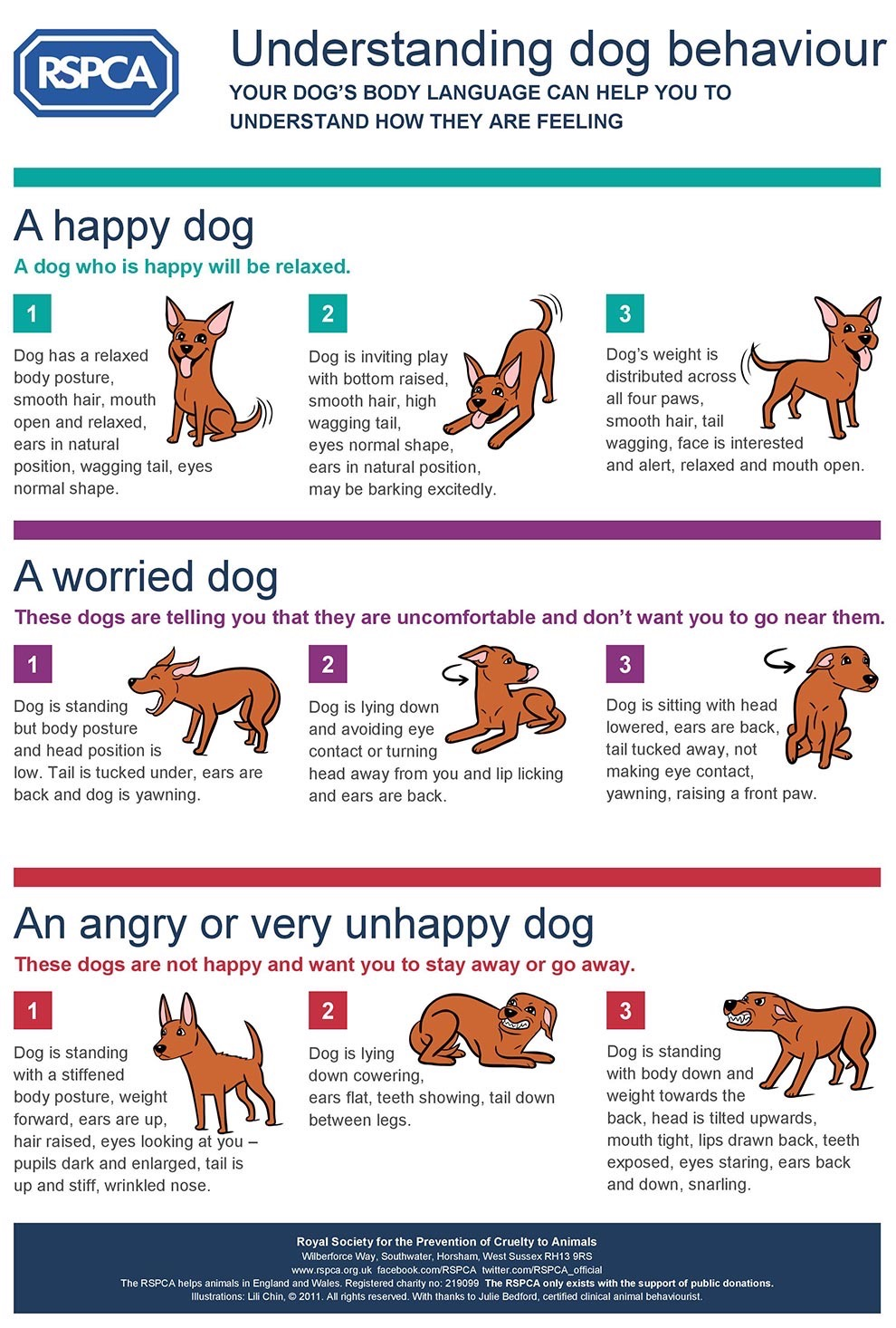 Pin On Training Tips Dogs Cats