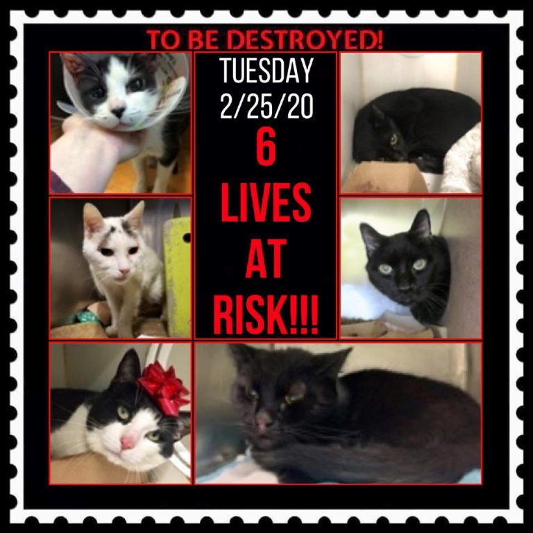Cats To Be Destroyed 02 25 20 In 2020 Cats List Of Animals Cat Help