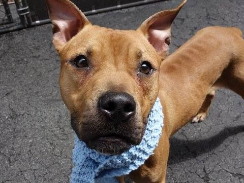TO BE DESTROYED 4/26/14 Manhattan Center P My name is DA