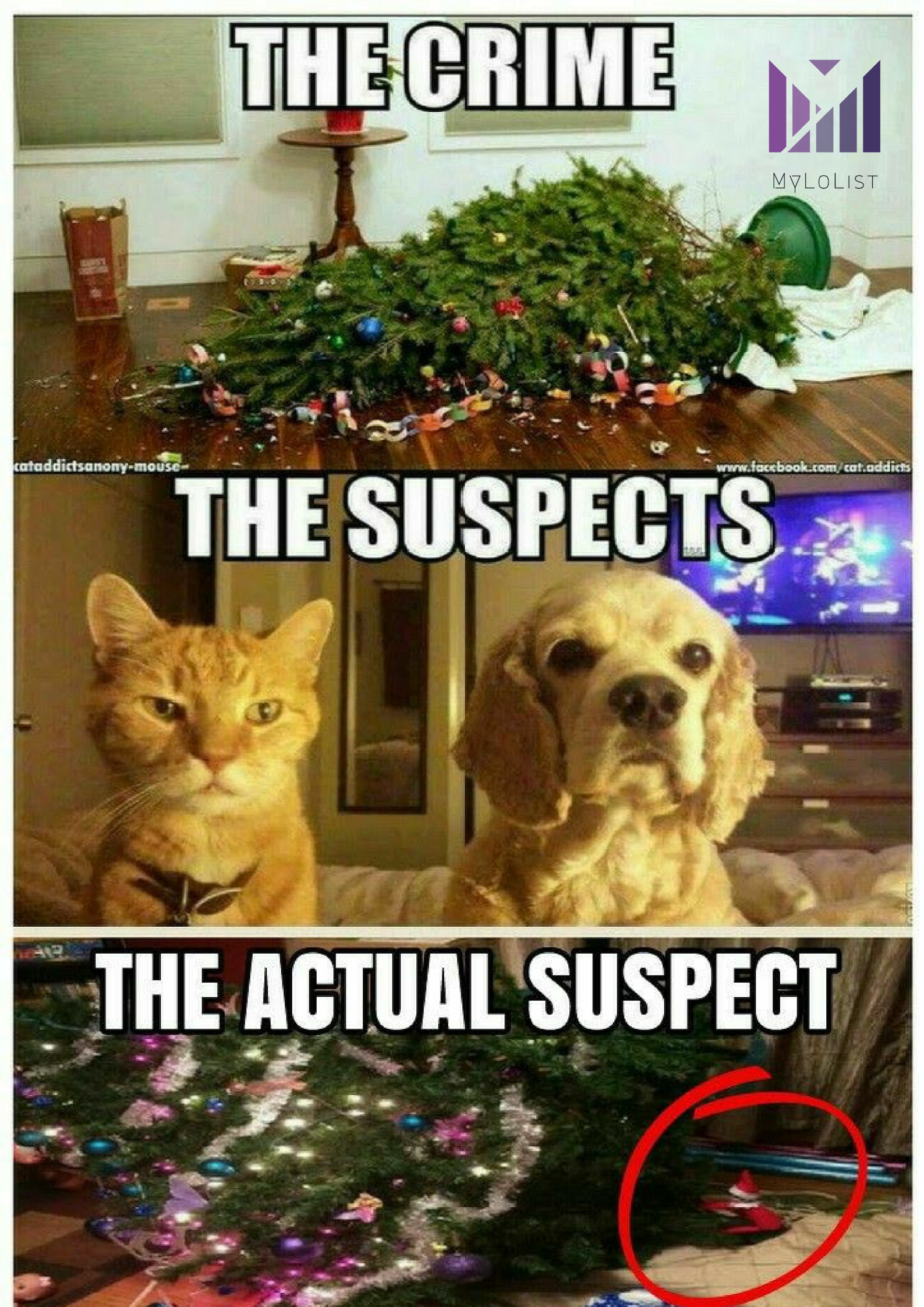Funny Quotes Funny Photos Funny Animals You Can Never Who Is To Blame For The Weirdest Things In Funny Animal Jokes Funny Animal Memes Cute Animal Memes