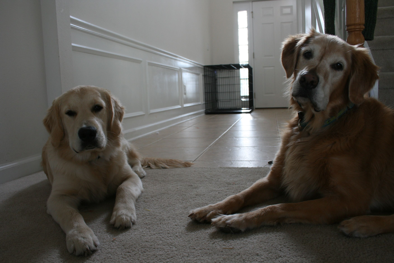 My doggies. One left ;)