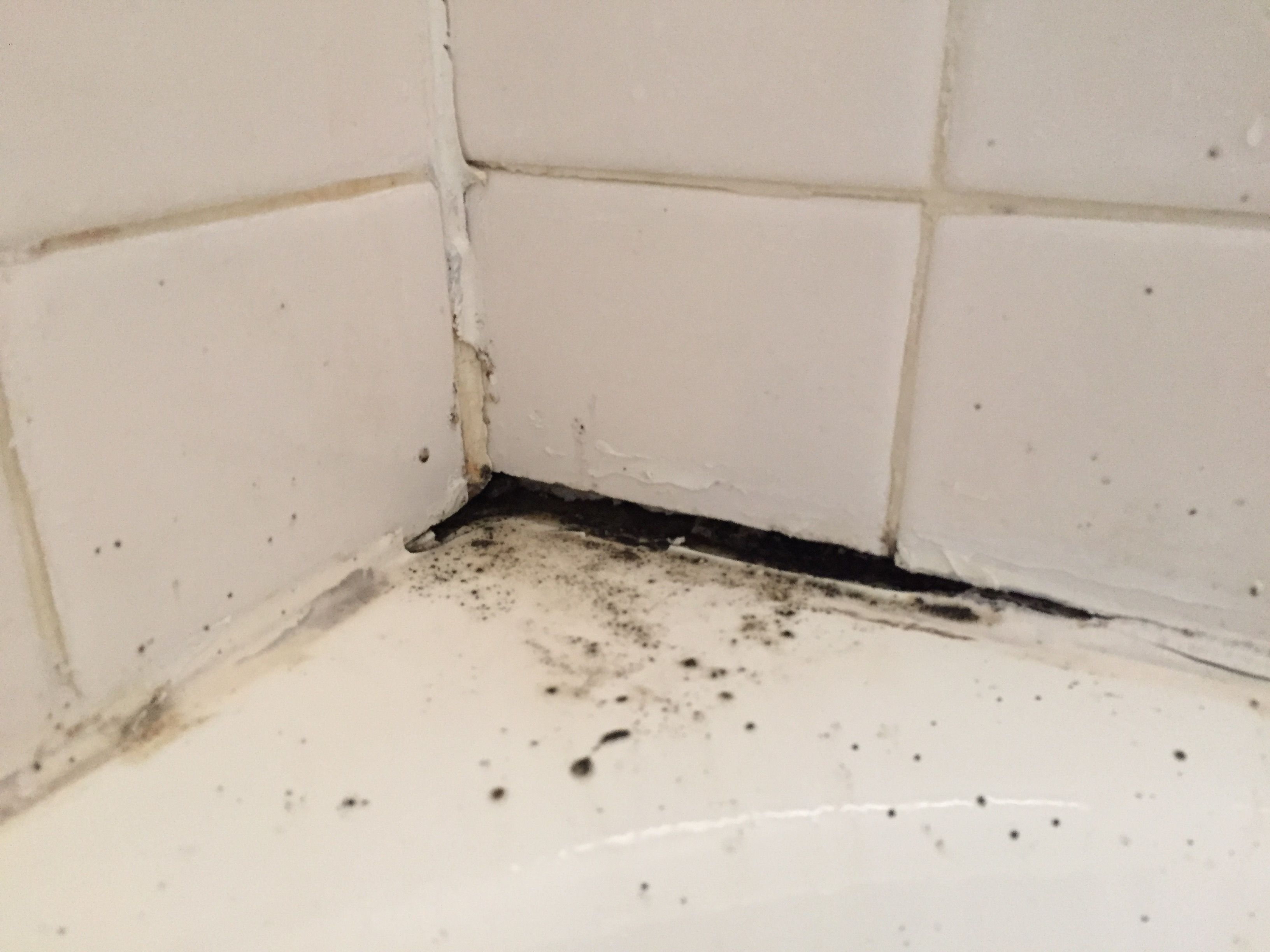 The Most Effective Methods To Kill Black Mold Naturally Ncleaningtips Com Kill Black Mold Mold In Bathroom Cleaning Mold
