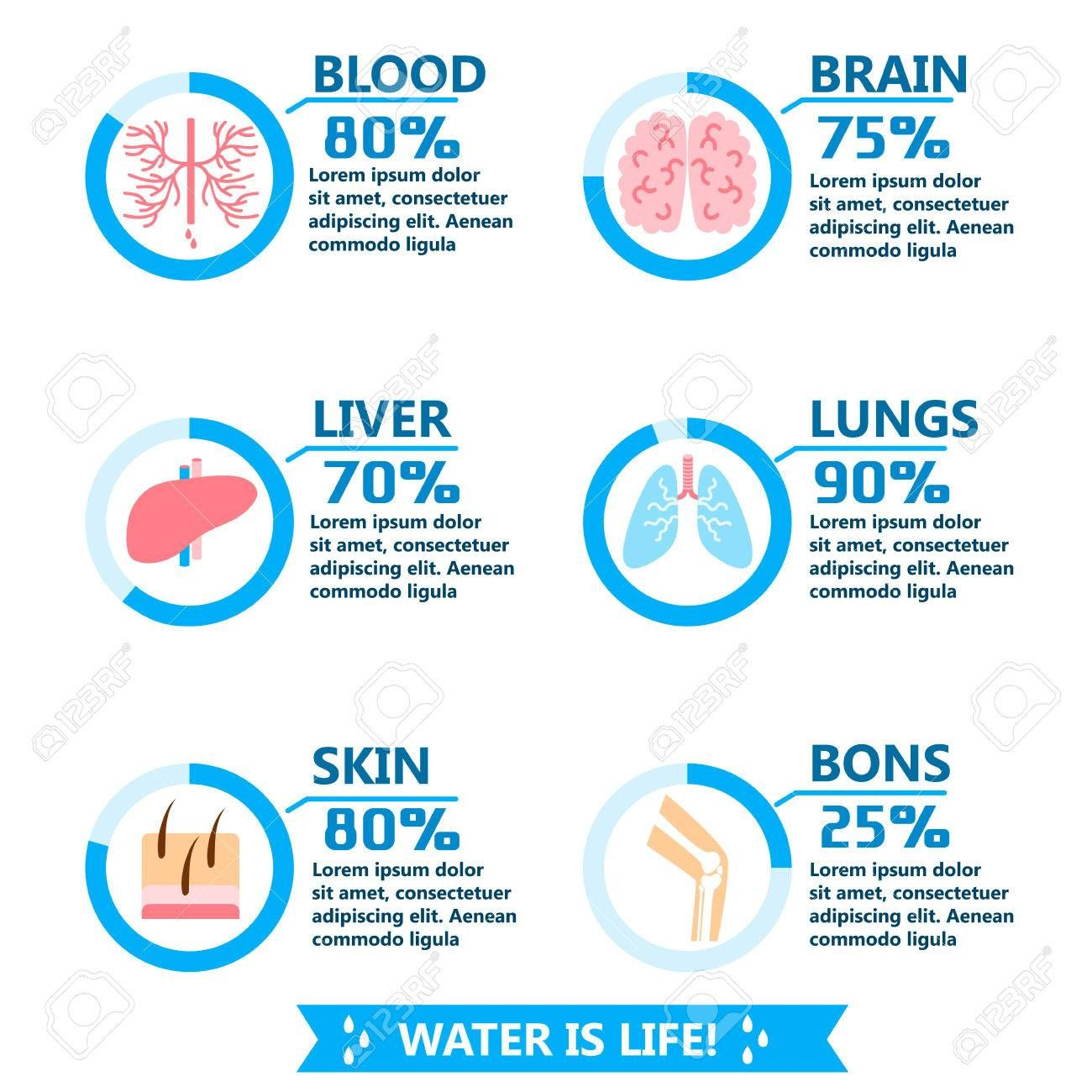 Body Water Drink Infographics Health People Diet Lifestyle Concept
