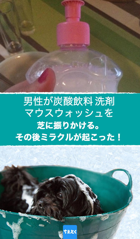 食器などを洗うのに使う洗剤 実は洗剤にはこんな隠れた使用方法がある