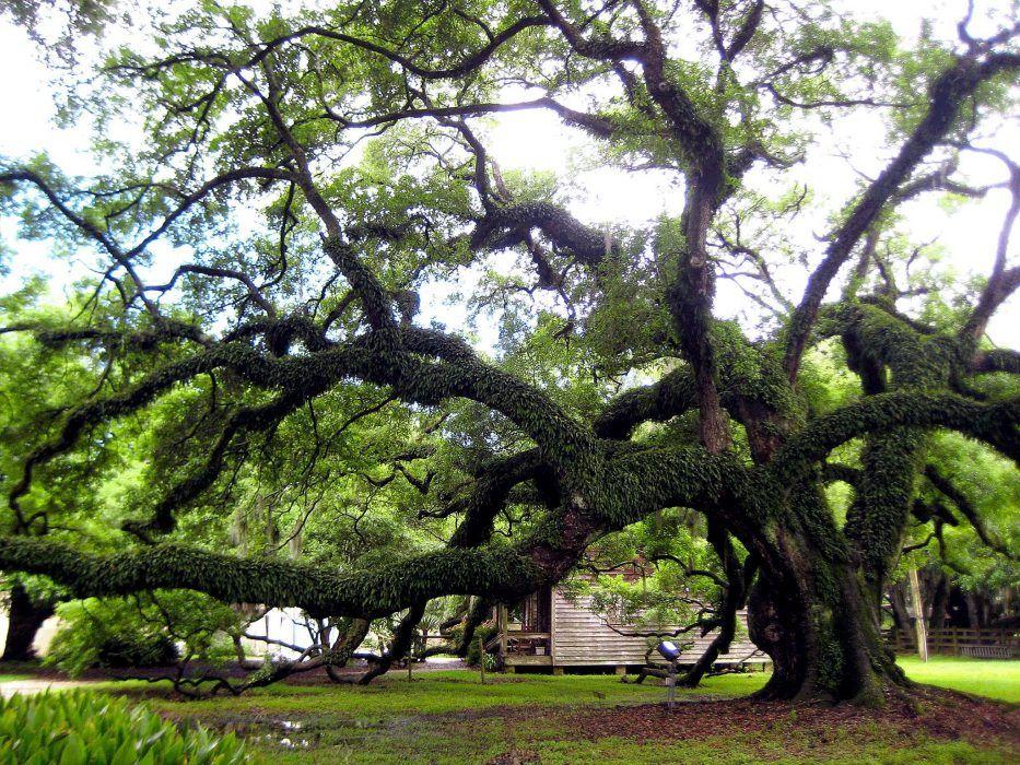Destrehan Plantation New Orleans 2016 New orleans