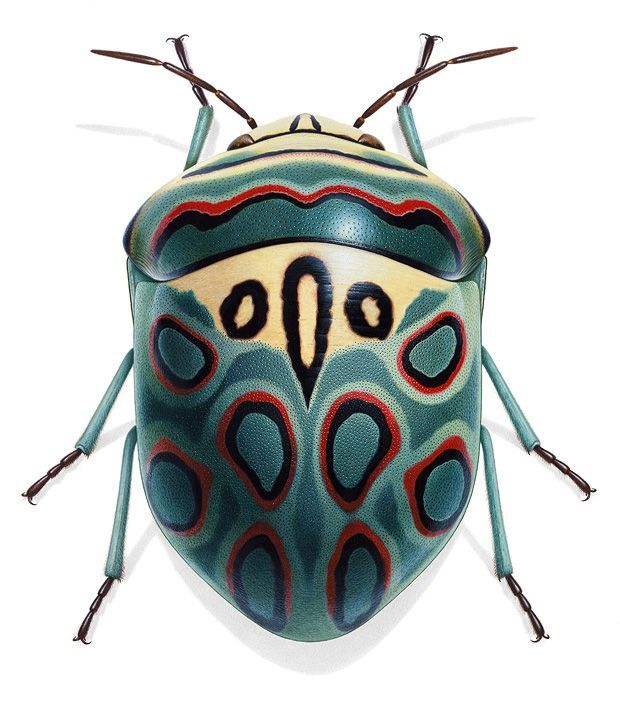 Insekten im Porträt: Krabbeln, Kribbeln, Colour-Blocking