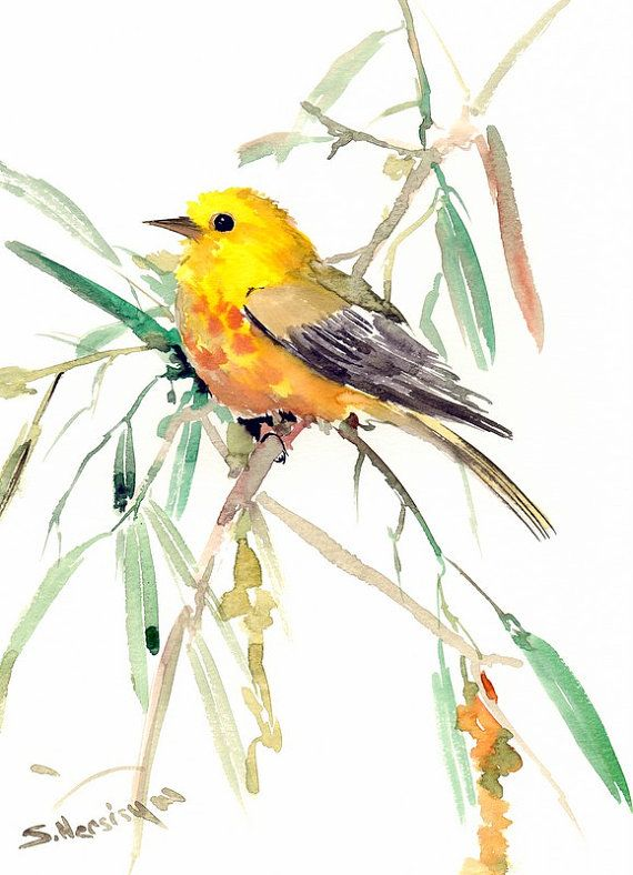 Bird Painting Yellow Warbler Original Watercolor 12 X 9 In