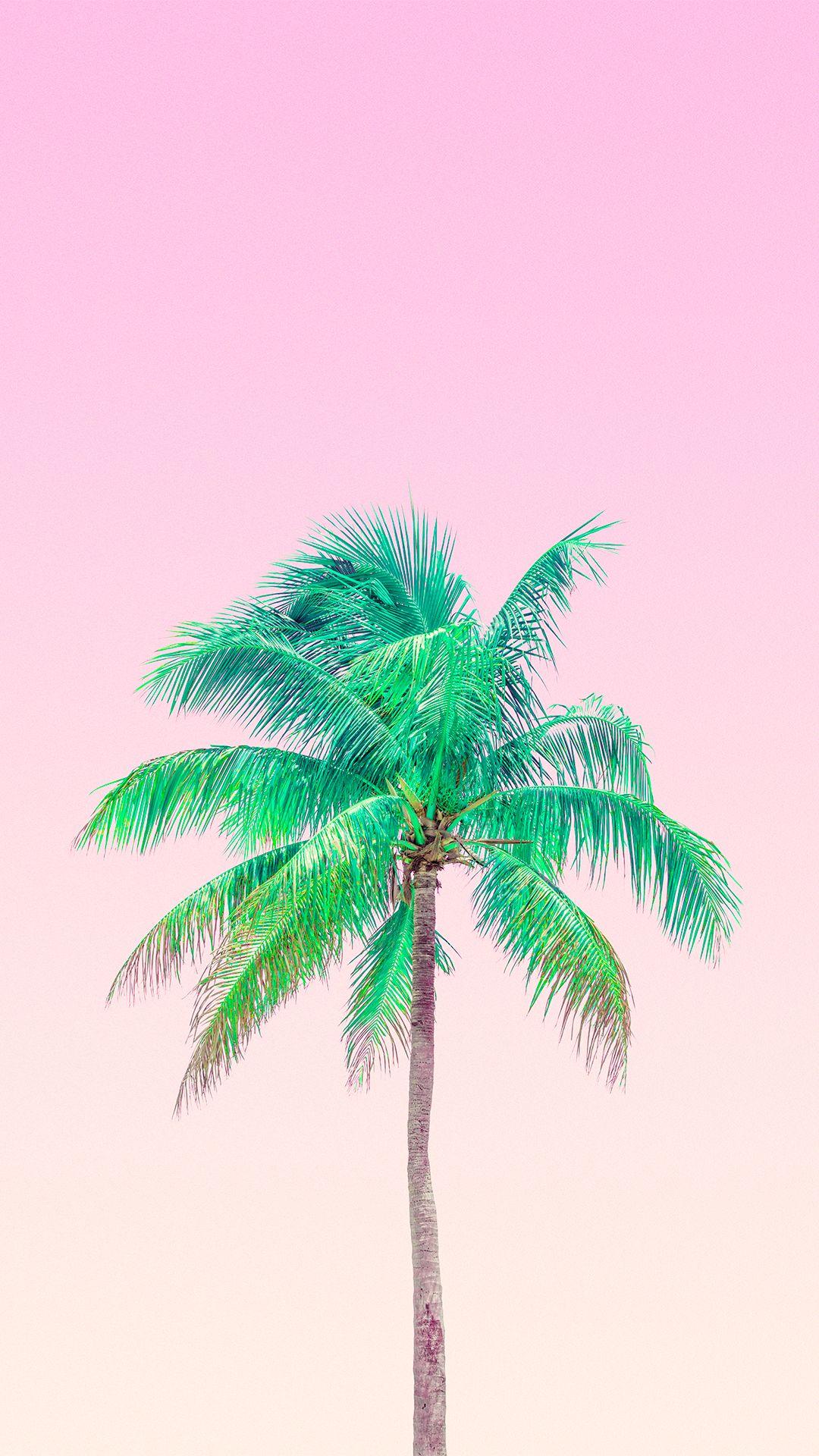 Palm tree wallpaper 夏 壁紙, 木の壁紙