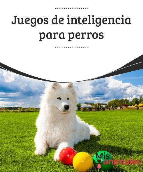 Juegos De Inteligencia Para Perros Mis Animales Juegos Perros Perros Entrenamiento Perros