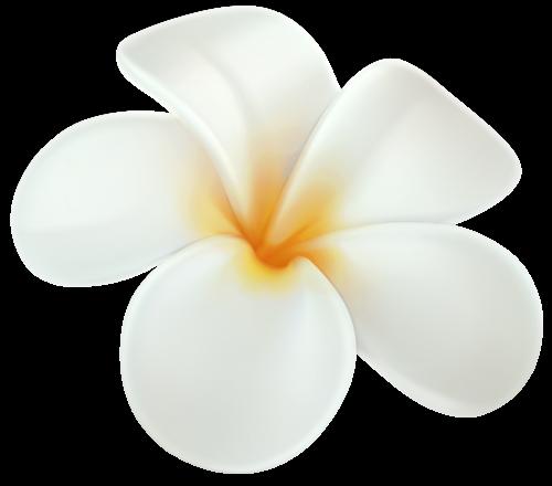 Plumeria Png Clip Art Plumeria Flowers Plumeria Flower Svg