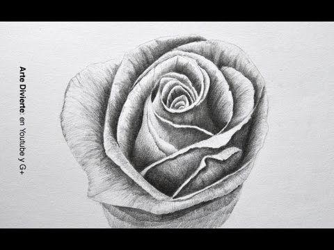 Dibujando flores cmo dibujar una rosa a lpiz  Arte Divierte