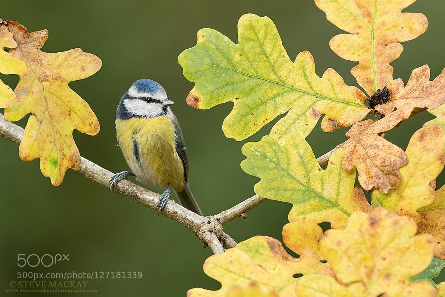 Autumn by stevemackayphotography #animals #pets #fadighanemmd