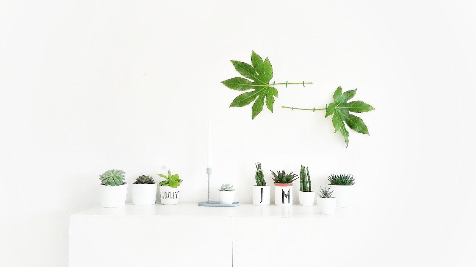 """My plant gang / mammilade blog / Auf der """"mammilade""""_n Seite des Lebens"""