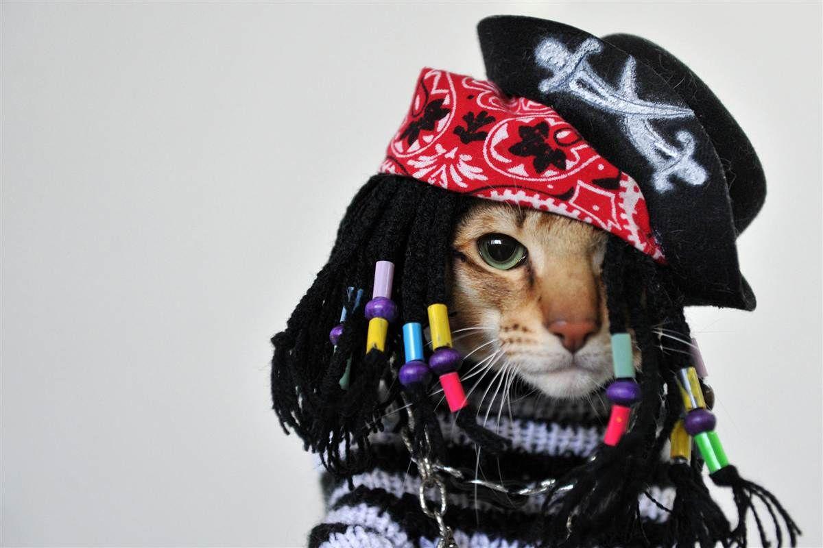 Animal Tracks Oct 16 23 Pet Costumes Pirate Cat Cool Cats
