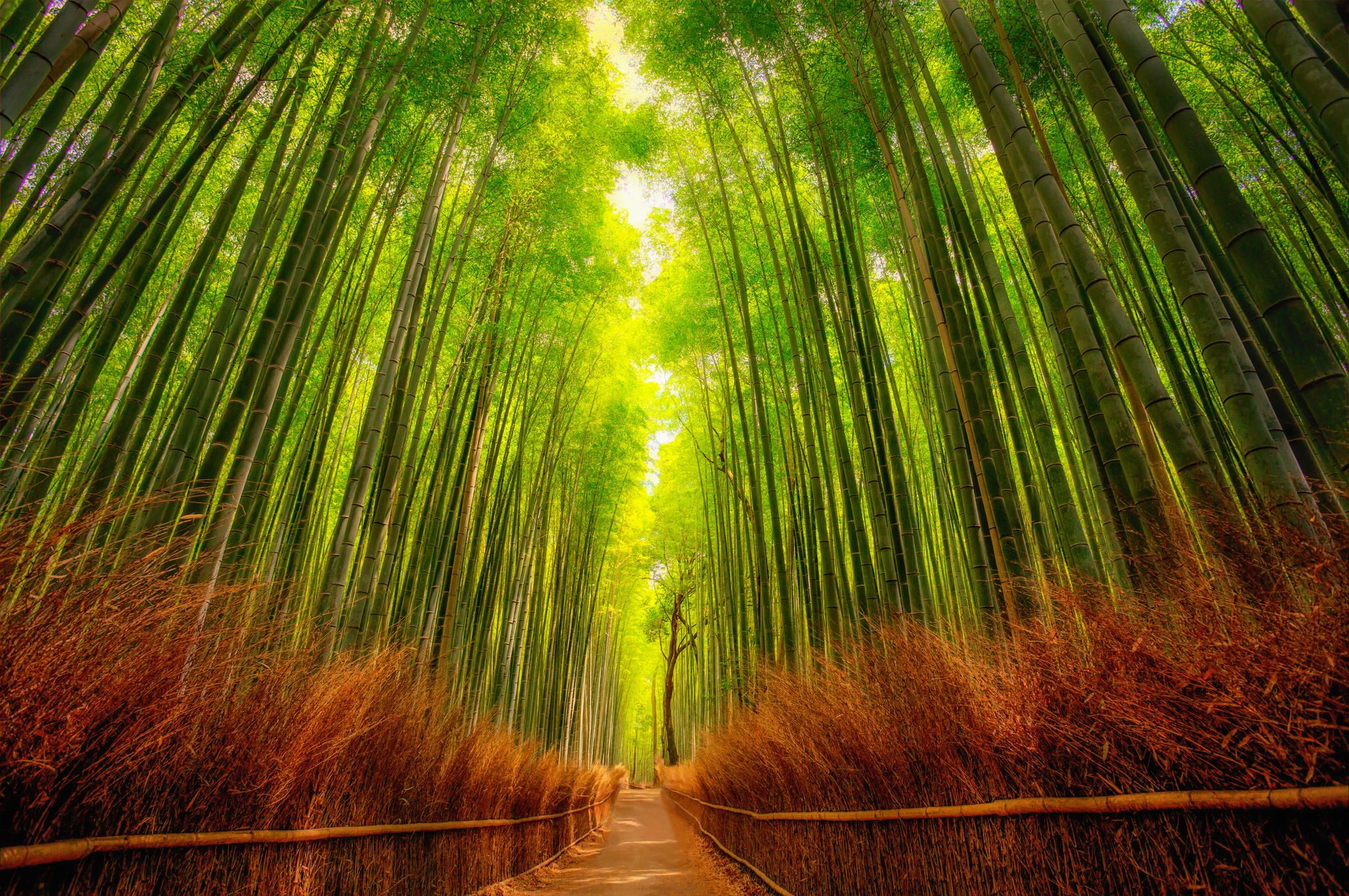 bamboo forest by rolf hartbrich nature is awesome pinterest