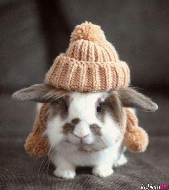 bunny in winter hat