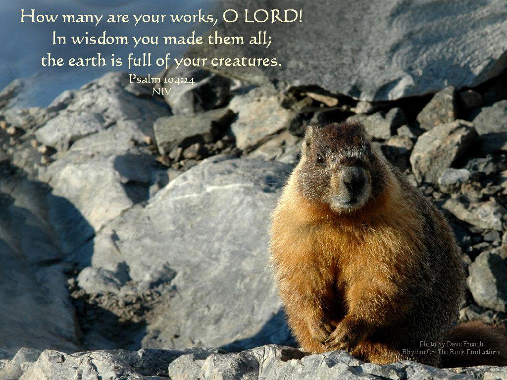 Wonderful Wallpaper Horse Bible Verse - 7578bc67e3331867afb4925cec0d2032  Trends_16398.jpg