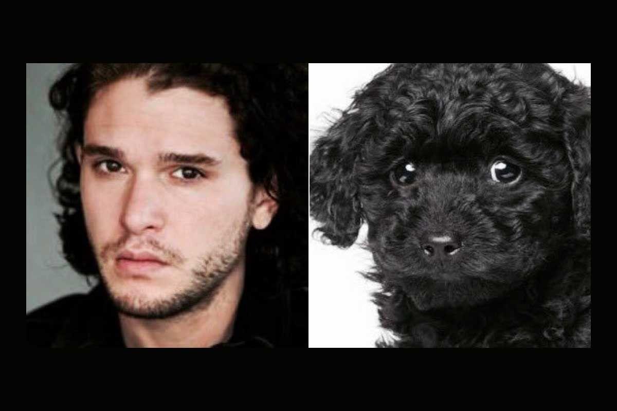 YouAreDogNow macht dich zum Hund. Es gibt für jeden einen Doppelgänger in der Gestalt eines Hundes. Das verspricht eine Twitter-Seite seinen Followern, wenn