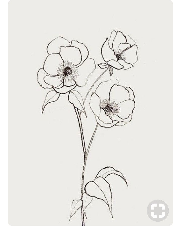 Magnolia Flowers Flower Sketches Poppy Drawing Flower Drawing
