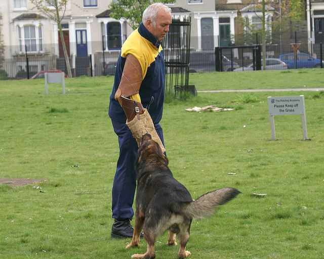 Pin By Jordan James On Free Dog Training Courses Dog Training