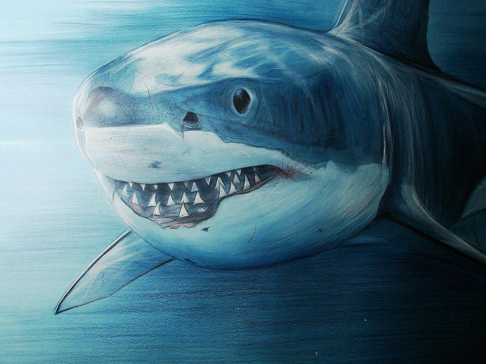 Буратино, крутые рисунки акул