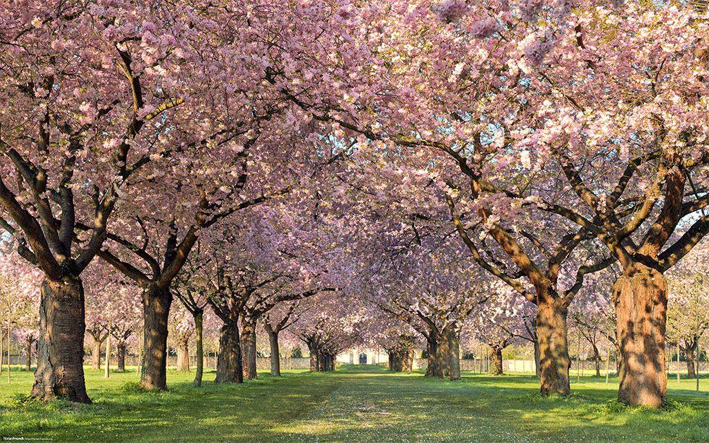 Spring Scenes Pic Full Hd By Radford Birds