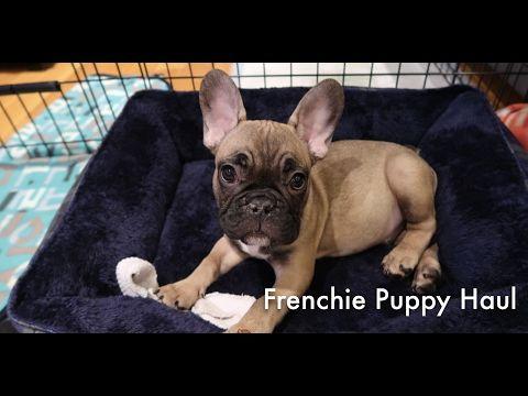 Puppy Haul For French Bulldog Ellenie Youtube Pets