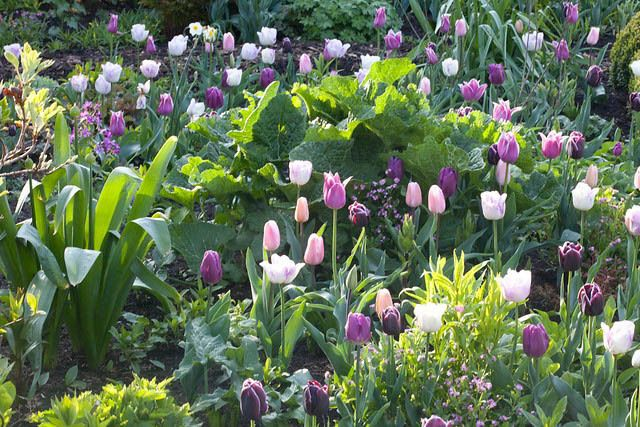 Garden Ideas For Spring spring combination ideas, bulb combinations, plant combinations