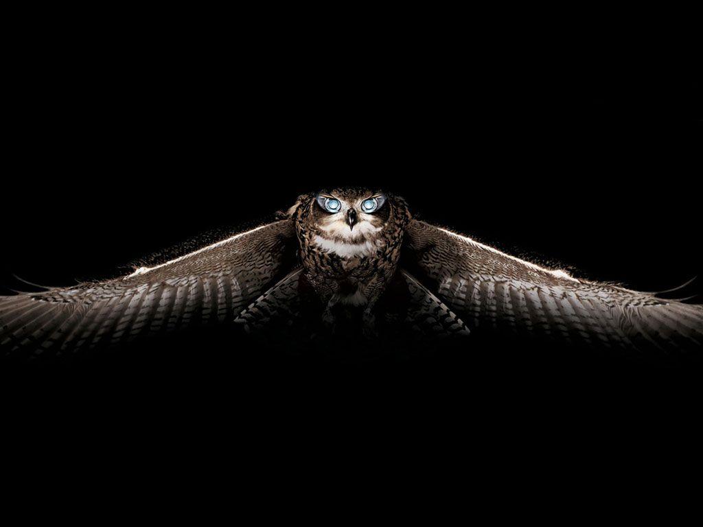 Owl Wallpapers Animals Pinterest Owl wallpaper