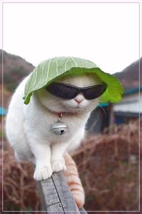Gambar Kucing Lucu Cute Animals Cats Funny Animals