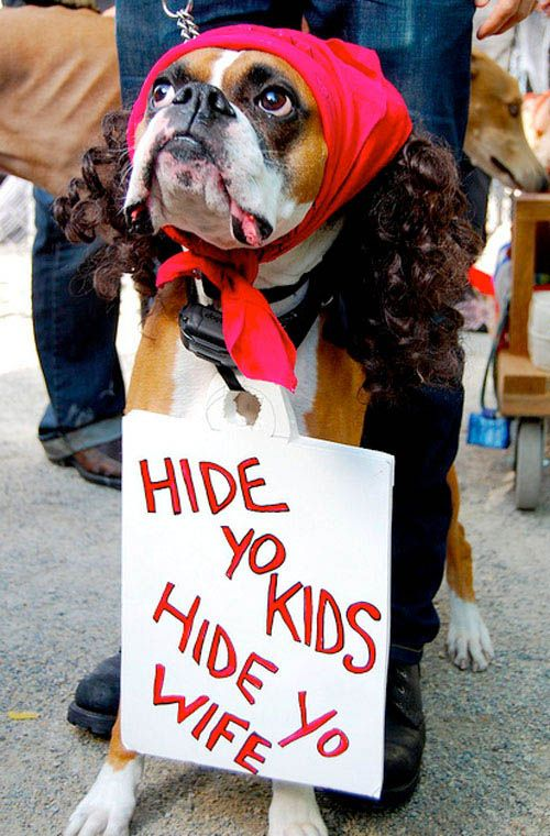 Antoine Dodsen Dog Costume | My Disguises - We Love Costumes : boxer dog costume  - Germanpascual.Com