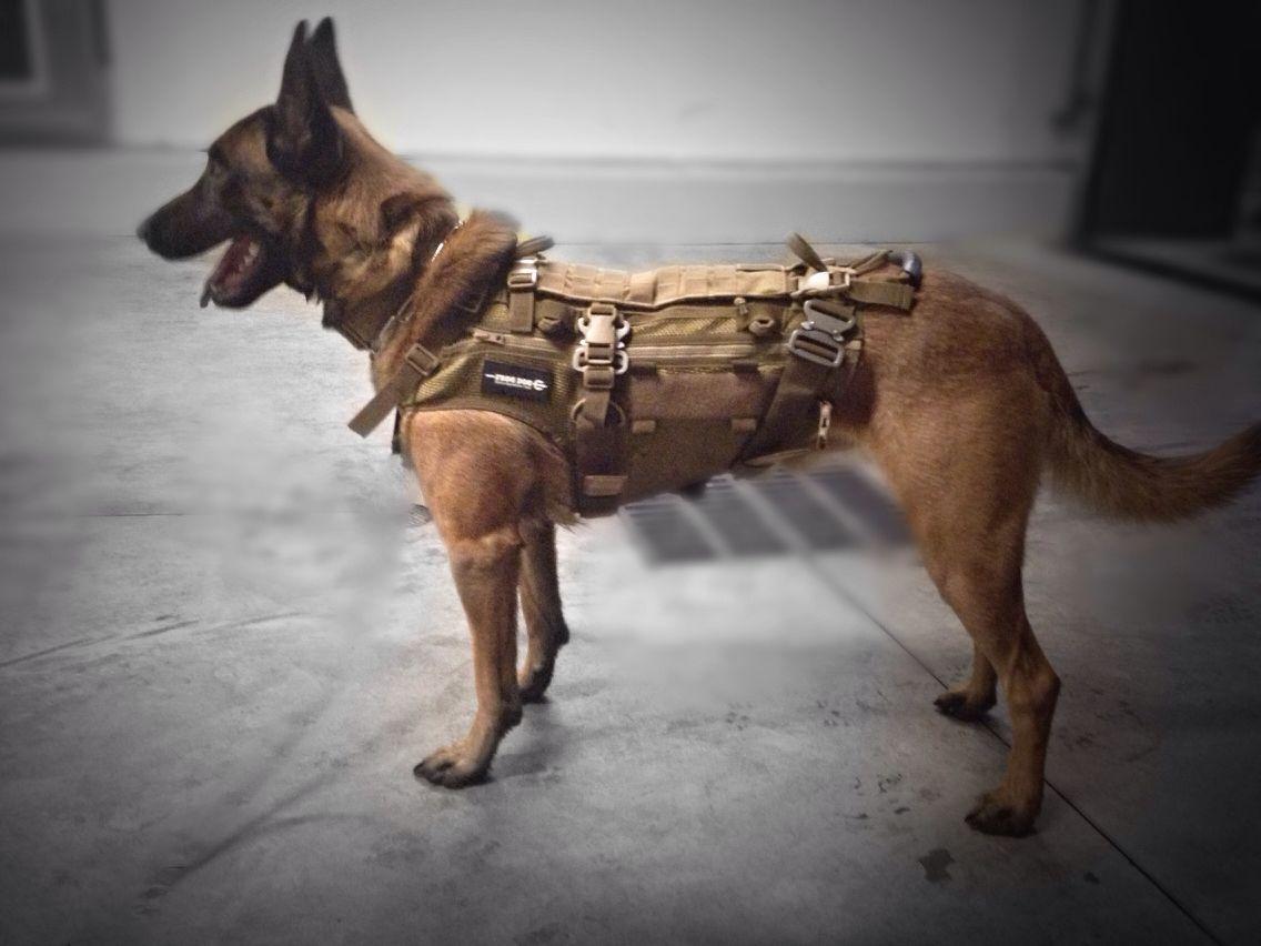 Frog Dog Modular Patrol Harness by SEG   k9   Pinterest   Dogs ...