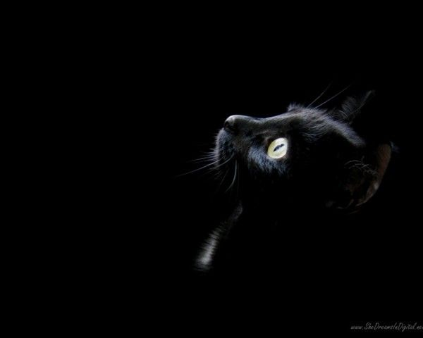 Fond Noir Fond D Ecran Chat Chat Noir Fond Noir