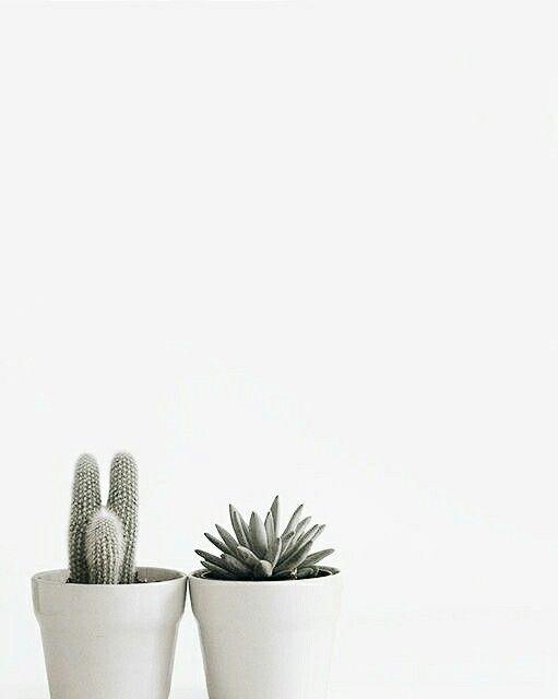 kakteen in grauem bertopf plants pinterest bert pfe kaktus und grau. Black Bedroom Furniture Sets. Home Design Ideas
