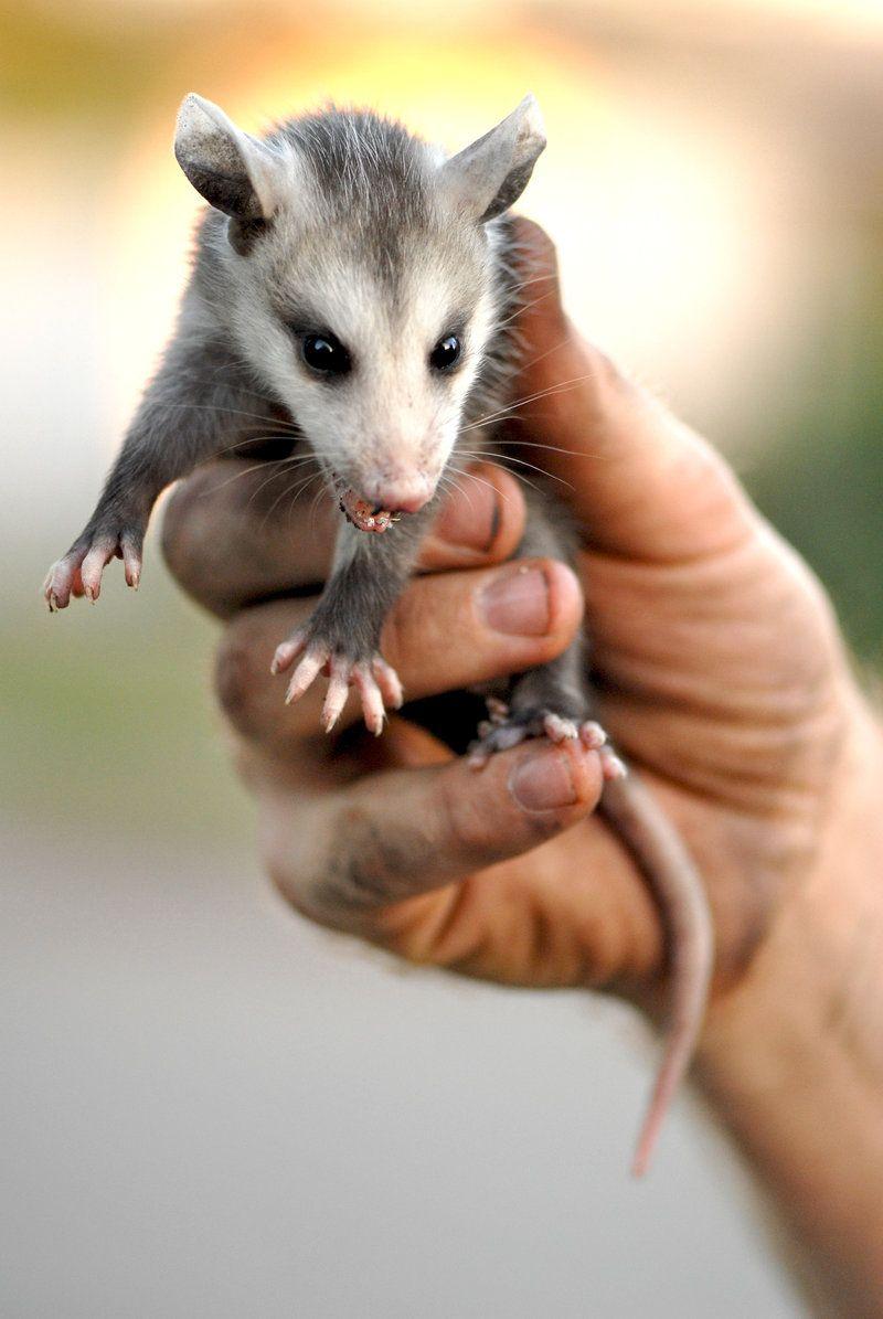 baby skunks wih flowerbaby possum baby toad little baby