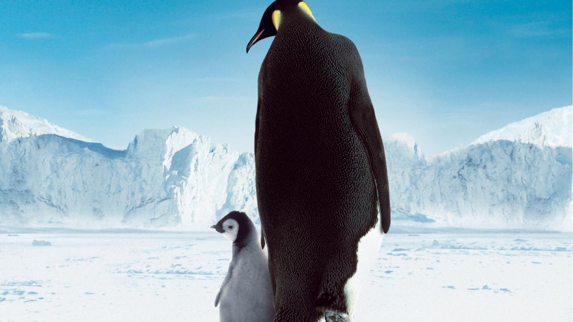 Pingviinien Matka