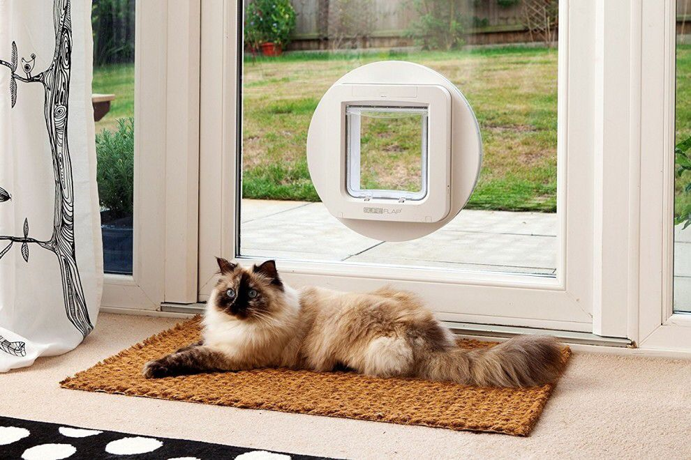 Pin By Hillary C On Dream Home Stuff Cat Door Dog Door Pet Door