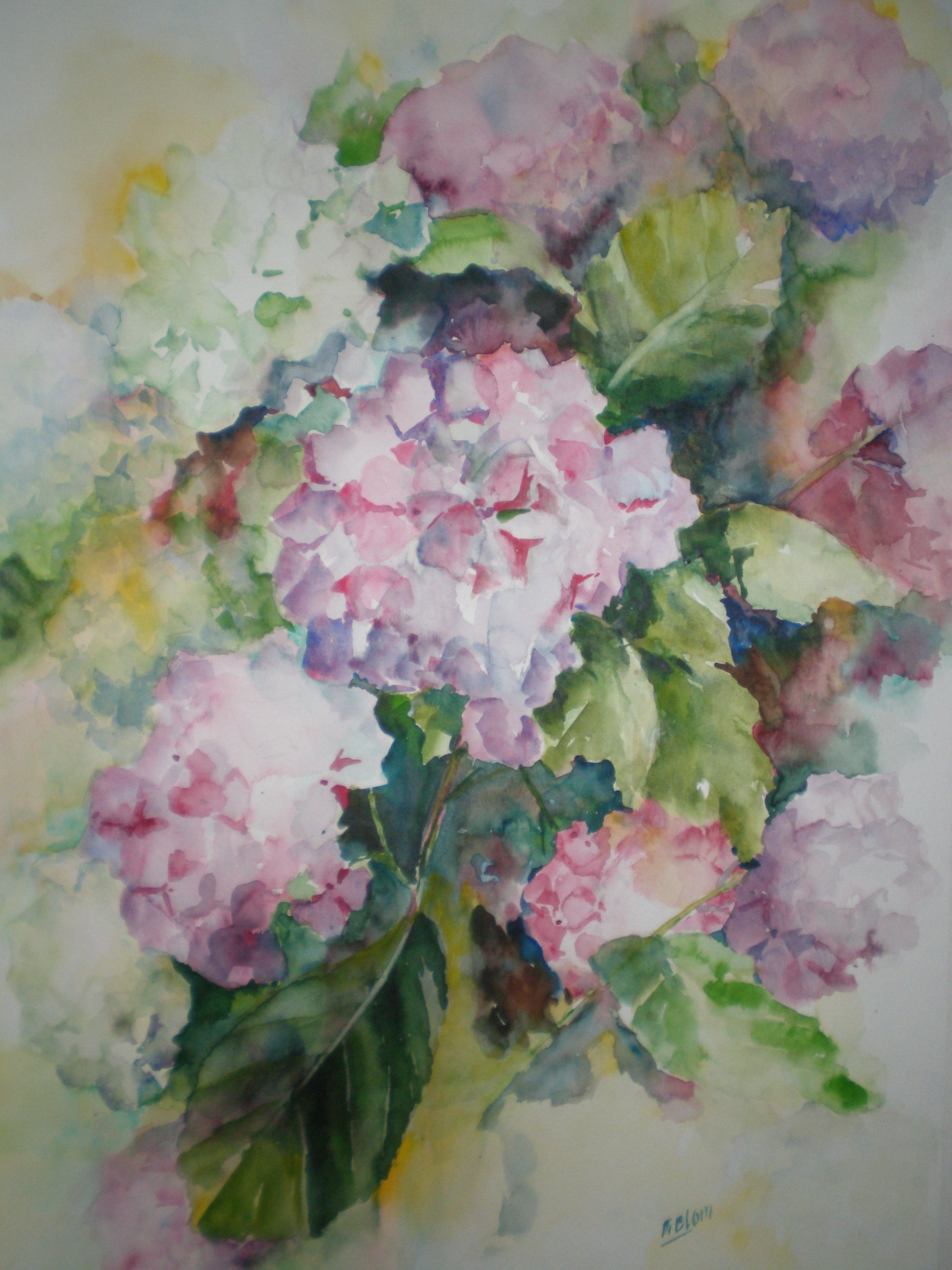 Hortensia In Aquarel Floral Watercolor Floral Painting