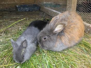 Pin On Bunnies Rabbits Breeds