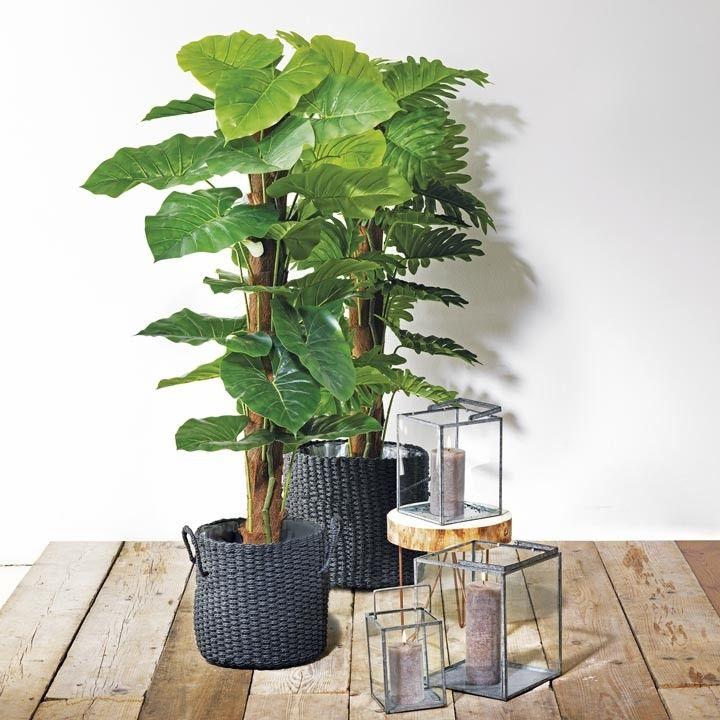 Grote hippe groene planten staan nog mooier in een mand for Grote kamerplanten