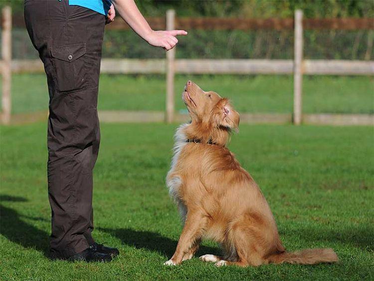 Si Pensabas Que Esto Era Una Tarea Imposible Te Mostramos Cómo Educar A Un Perro Adulto Con Estos útiles Tips De Educar A Un Perro Entrenamiento Perros Perros